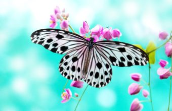 Butterfly Wallpapers 13 2560 x 1700 340x220