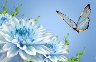 Butterfly Wallpapers 16 1920 x 1080 340x220
