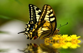 Butterfly Wallpapers 18 1920 x 1920 340x220