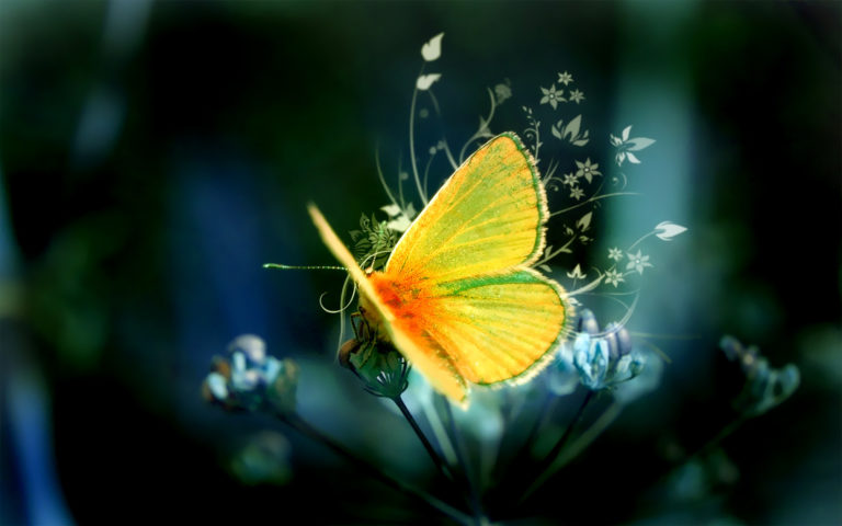 Butterfly Wallpapers 27 1680 x 1050 768x480
