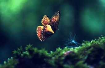 Butterfly Wallpapers 37 1922 x 1080 340x220