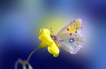 Butterfly Wallpapers 45 2880 x 1800 340x220