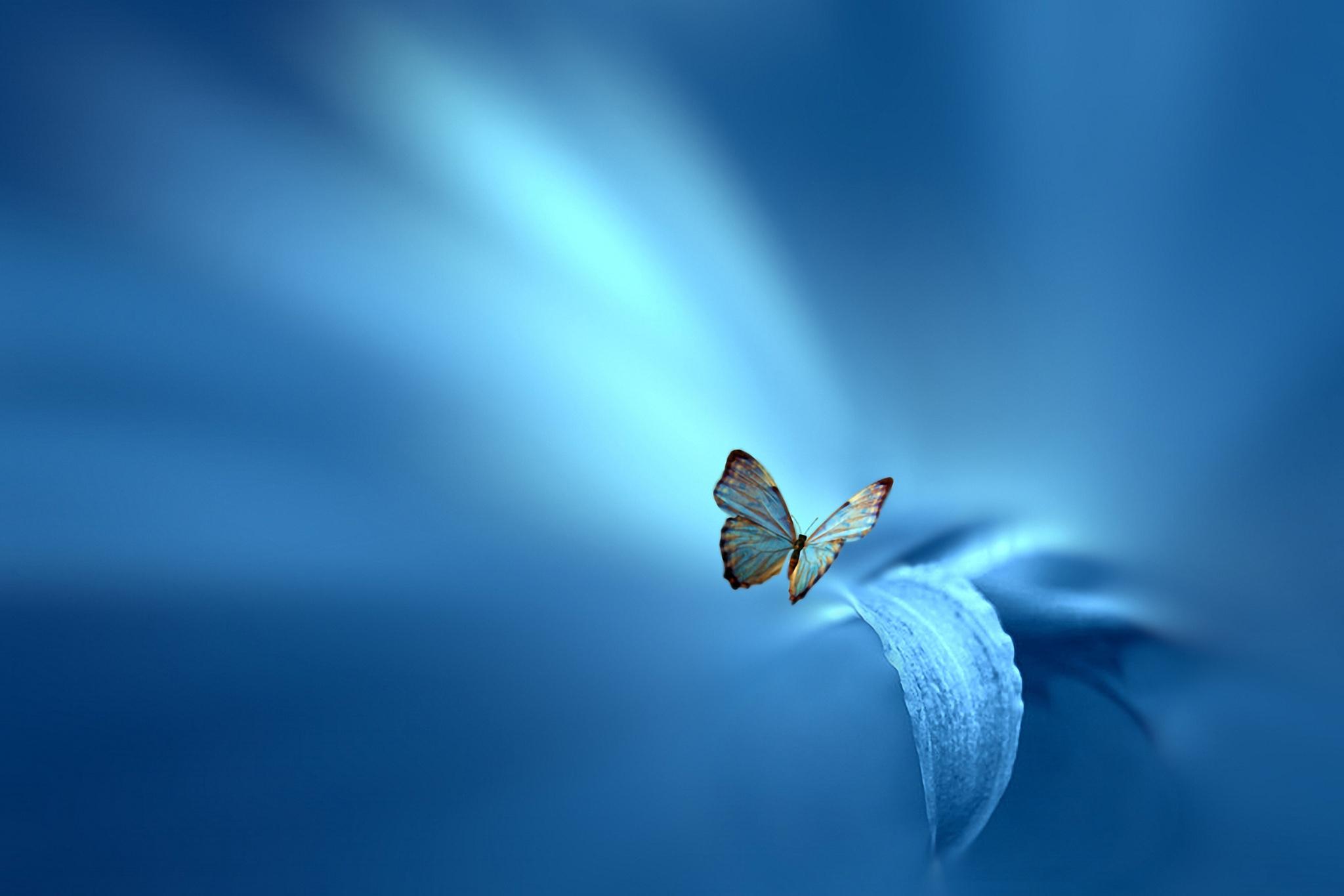 природа бабочка животные цветы синие загрузить