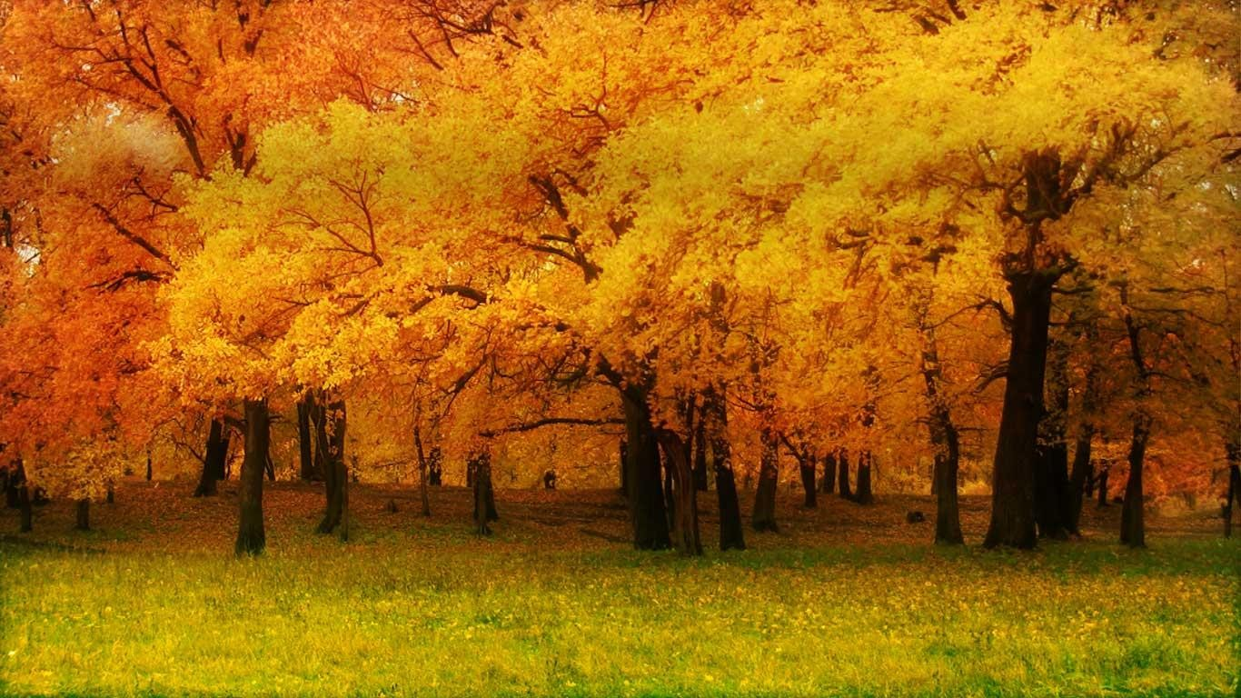Fall Wallpapers 32 1366 X 768 340x220
