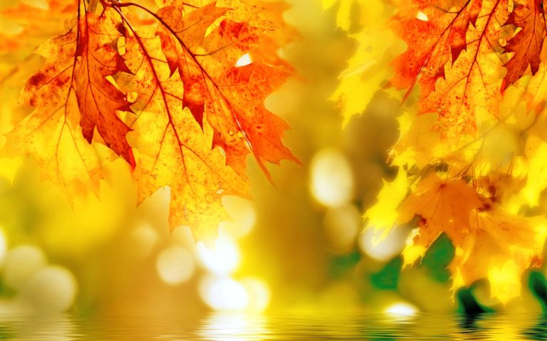 Fall Wallpapers 43 2880 x 1800 768x480