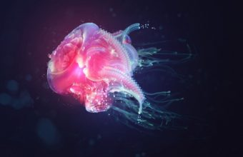 Jellyfish Underwater Light 2560 x 1600 340x220