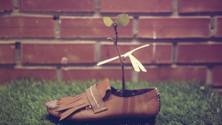 Shoes Plants Grasses 3840x2160 768x432