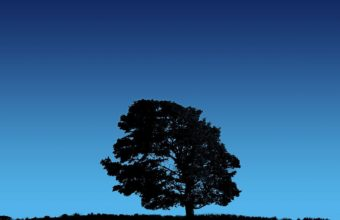 Tree On Blue Sky 1280 x 1024 340x220