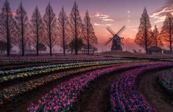 Windmill Wallpaper 40 2048x1365 340x220