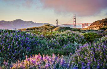 Golden Gate Wallpaper 33 2560x1600 340x220