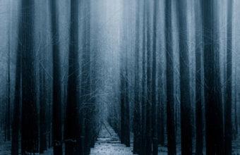 Dark Forest Woods Snow Winter Vv Wallpaper 640 x 960 340x220