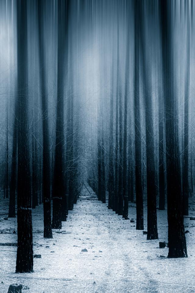 Dark Forest Woods Snow Winter Vv Wallpaper 640 x 960