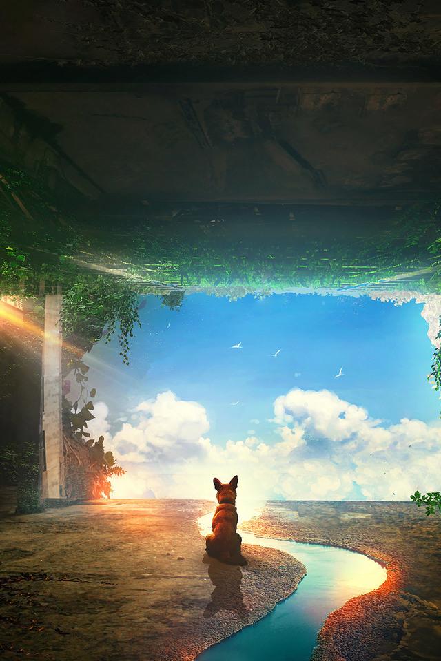 Dog Post Apocalyptic Q2 Wallpaper 640 x 960