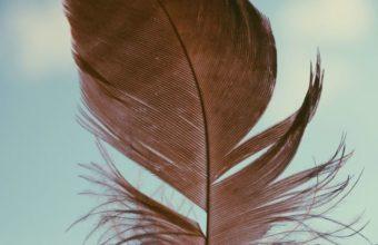 Feather Sky Bb Wallpaper 640 x 960 340x220