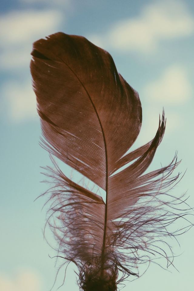 Feather Sky Bb Wallpaper 640 x 960