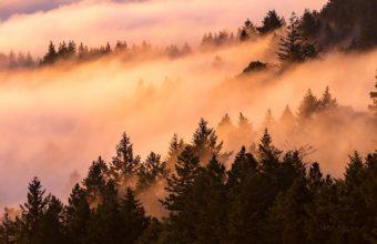Fog Landscape Pq Wallpaper 640 x 960 340x220