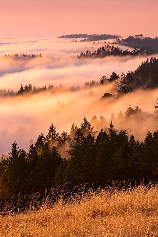 Fog Landscape Pq Wallpaper 640 x 960