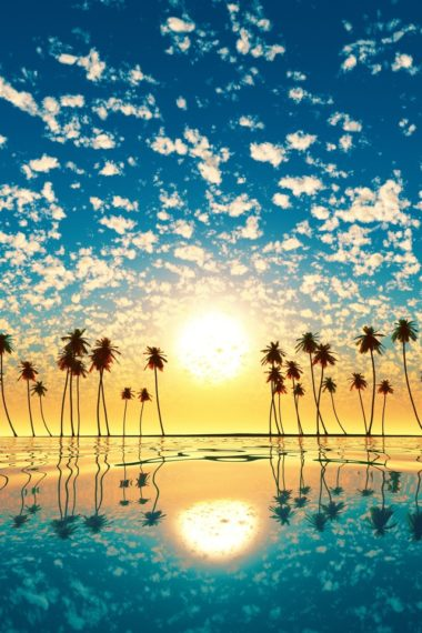 Palm Trees Reflection Sunset Cd Wallpaper 640 x 960 380x570