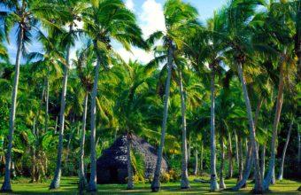 Tropical Wallpaper02 1600x1200 340x220