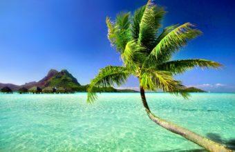 Tropical Wallpaper12 2880x1800 340x220