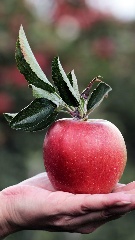 Apple Hand Fruit Wallpaper 2160x3840 768x1365