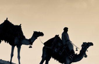 Arab People Camels Wallpaper 720x1280 340x220