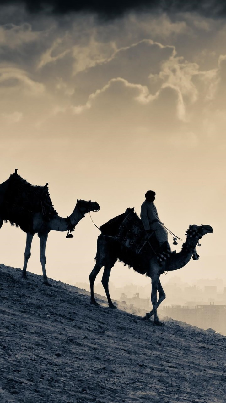 Arab People Camels Wallpaper 720x1280