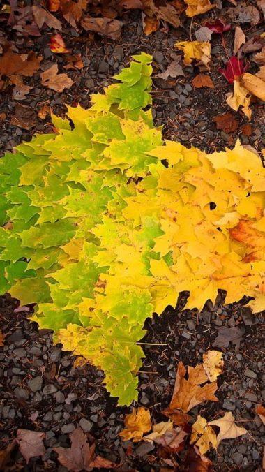 Autumn Leaves Arrow Wallpaper 720x1280 380x676