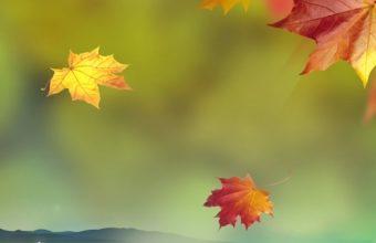 Autumn Wallpaper 1080x1920 340x220