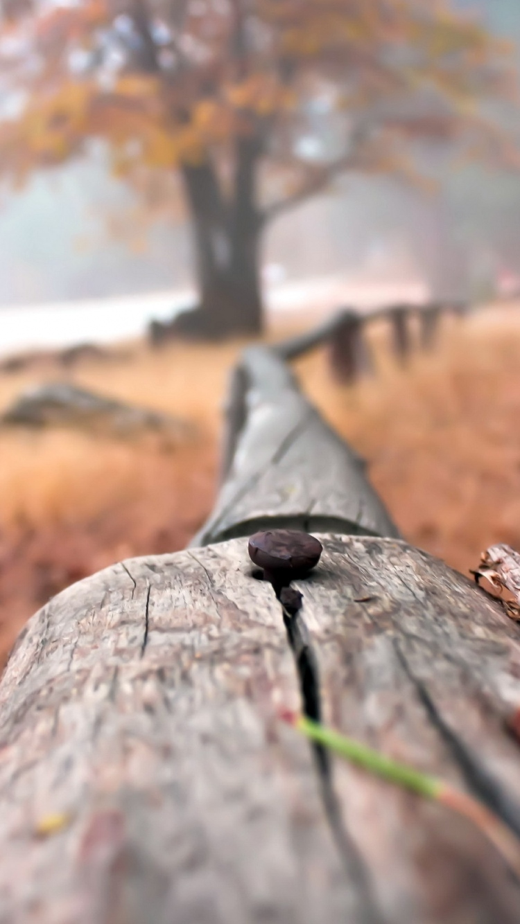 Background Close Up Fence
