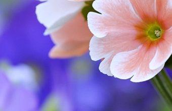 Beautiful Flowers Wallpaper 1080x2160 340x220
