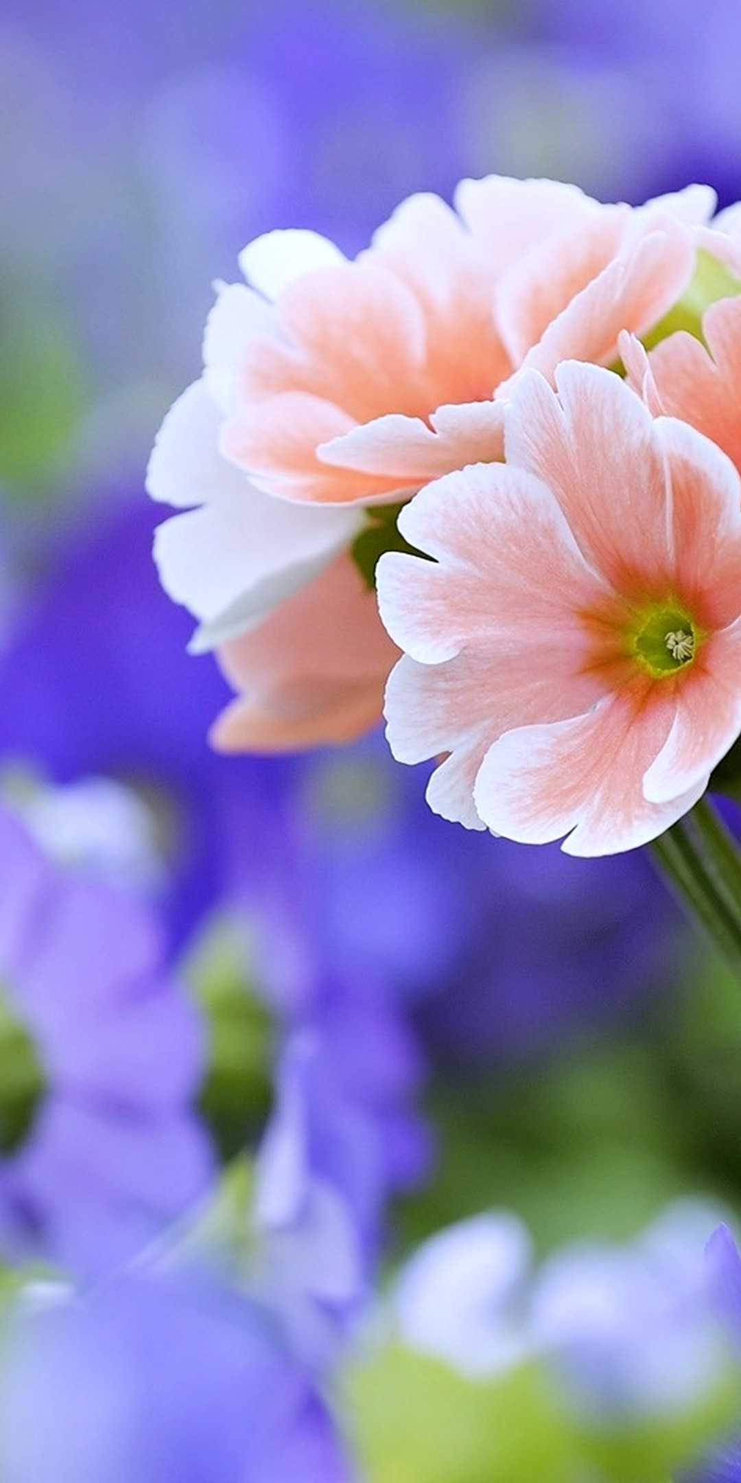 Beautiful Flowers Wallpaper 1080x2160