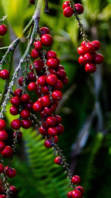 Berries Grapes Branch Wallpaper 2160x3840 768x1365