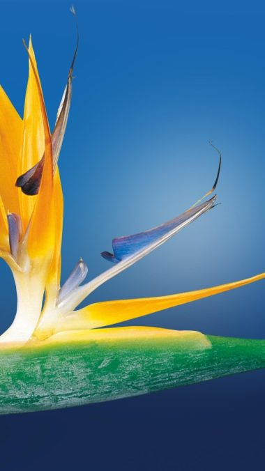Bird Of Paradise Wallpaper 720x1280 380x676