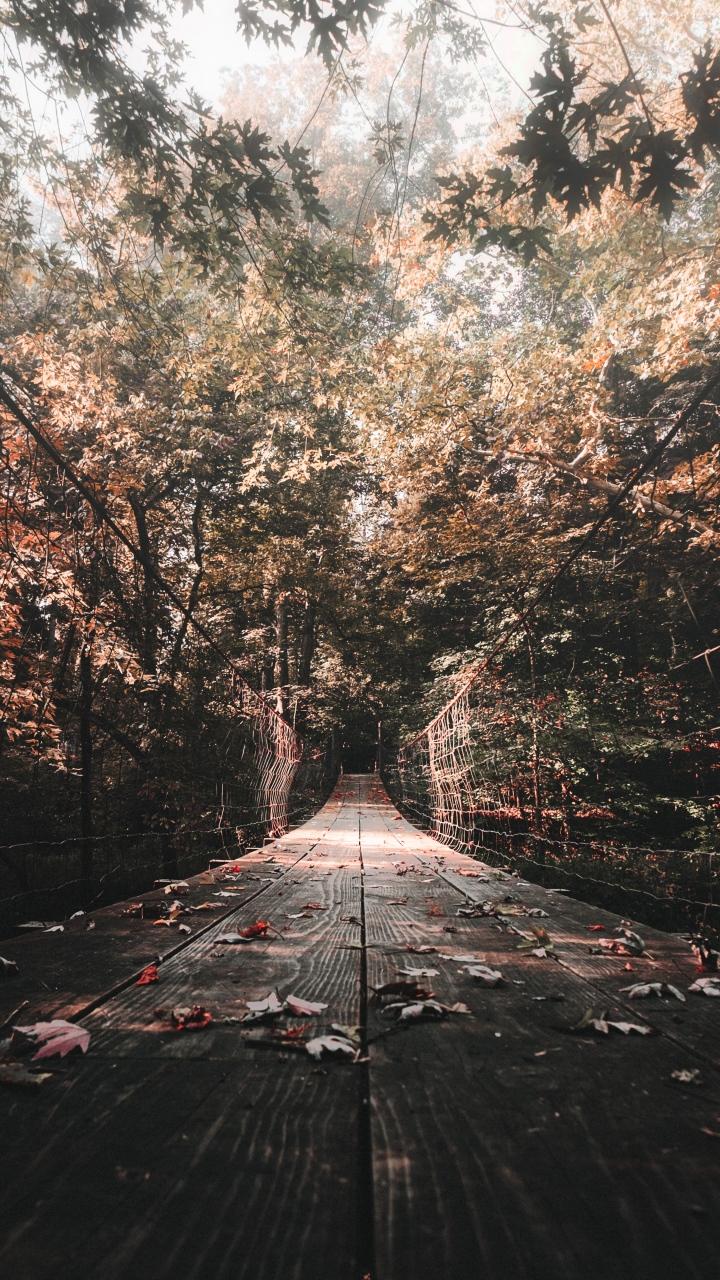 Bridge Autumn Foliage Wallpaper 720x1280