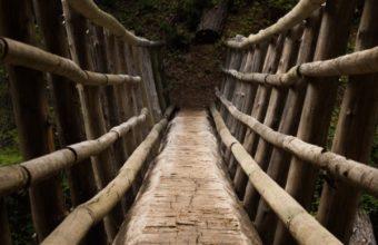 Bridge Descent Trees Wallpaper 720x1280 340x220
