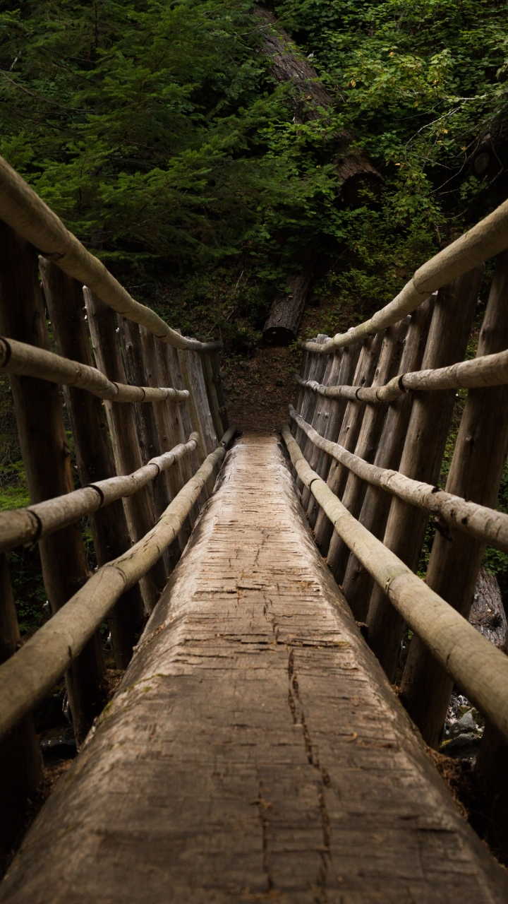 Bridge Descent Trees Wallpaper 720x1280