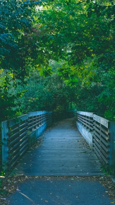 Bridge Path Trees Summer Wallpaper 720x1280 380x676