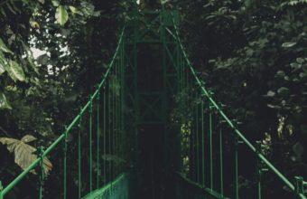Bridge Trees Foliage Wallpaper 2160x3840 340x220