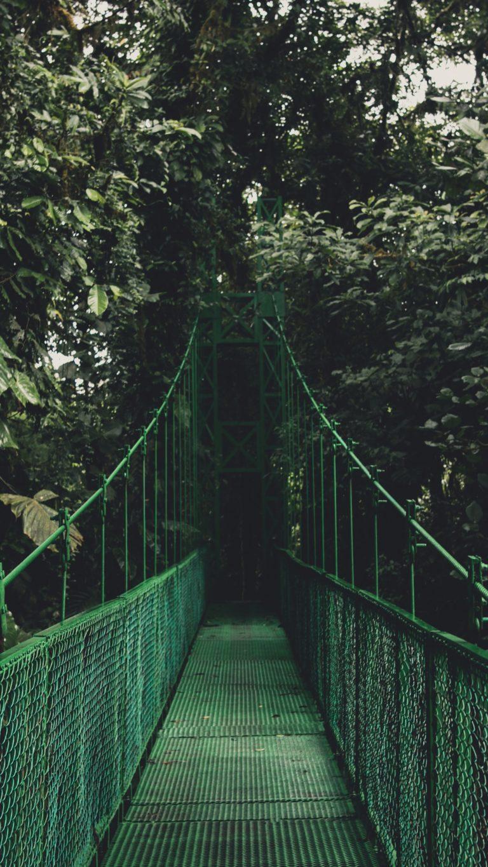 Bridge Trees Foliage Wallpaper 2160x3840 768x1365