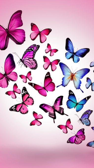 Butterfly Drawing Flying Colorful Background Pink 380x676