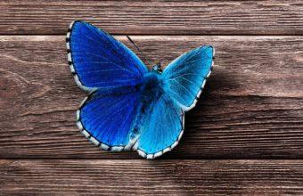 Butterfly Surface Wooden Wallpaper 2160x3840 340x220