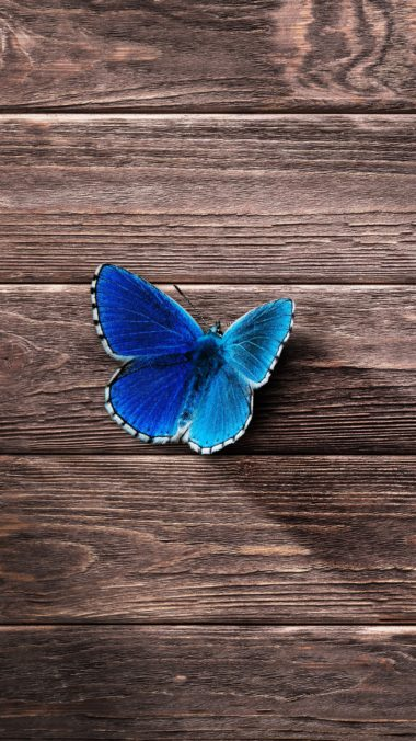 Butterfly Surface Wooden Wallpaper 2160x3840 380x676