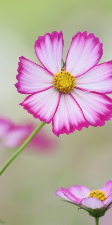 Cosmos Wallpaper 1080x2160 380x760