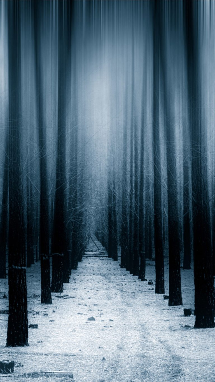 dark forest woods snow winter 8k vv wallpaper