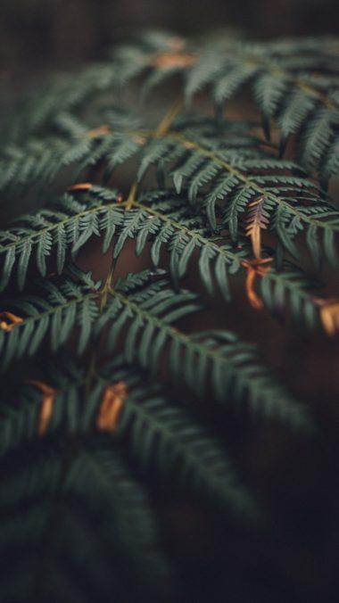 Fall Leaves Wallpaper 1080x1920 380x676
