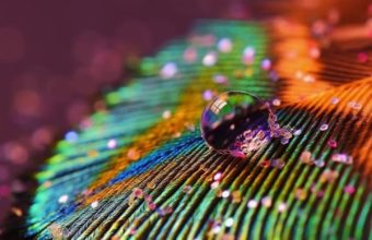 Feather Drop Wallpaper 720x1280 340x220