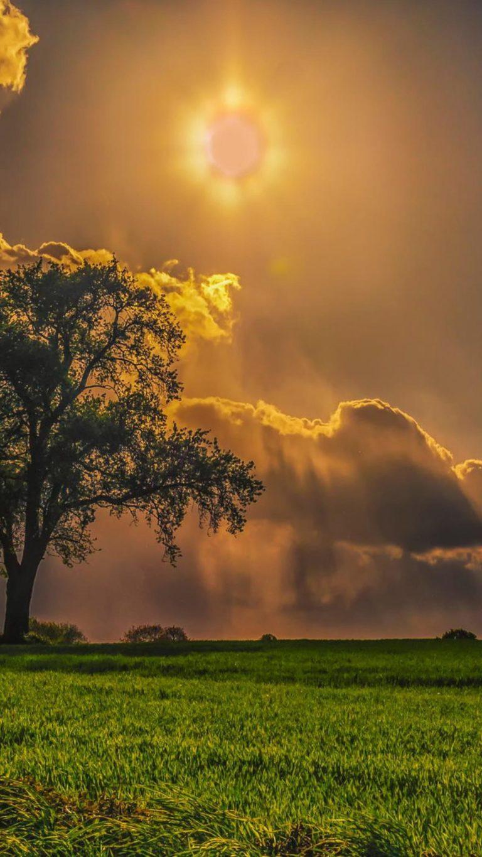 Field Trees Grass Sky Wallpaper 2160x3840 768x1365