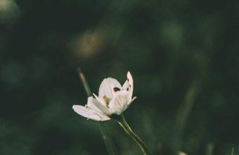 Flower Grass Blur Wallpaper 2160x3840 340x220