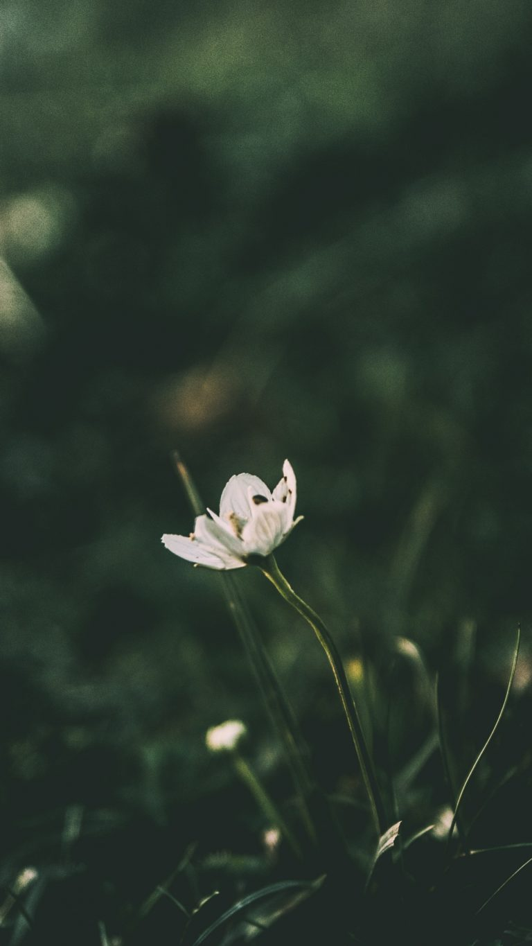 Flower Grass Blur Wallpaper 2160x3840 768x1365